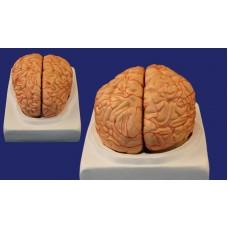 SMD122D Мозг